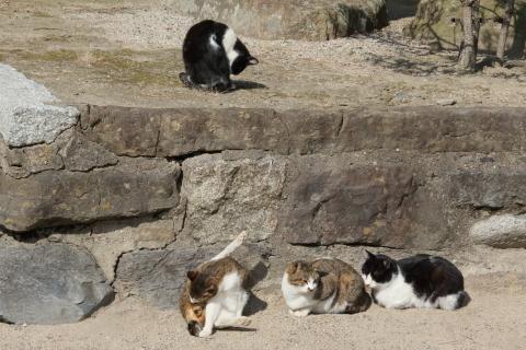 20180209cats.jpg