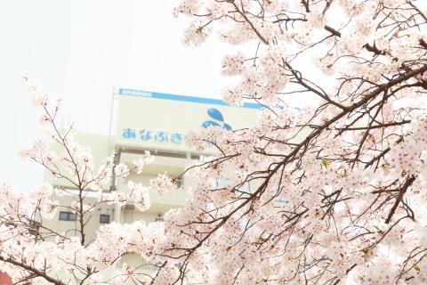 20180401sakura.jpg