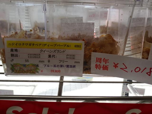 6周年2018円