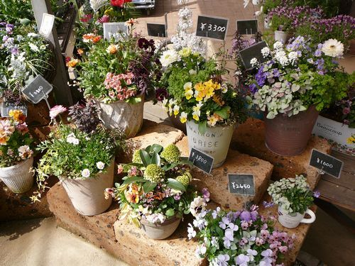 〈園芸〉春の陽気に誘われて