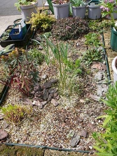 〈園芸〉今の庭
