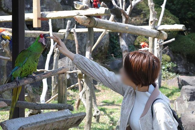 ミドリコンゴウインコ触る