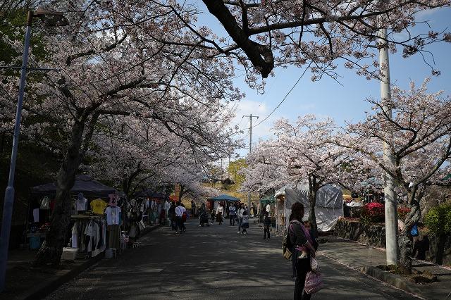 伊豆高原駅の桜まつり