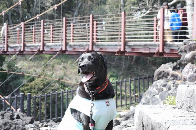 吊り橋とマル