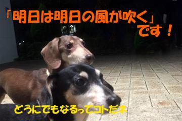 2017101411.jpg