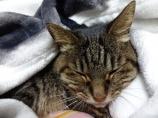 愛猫のミュウ