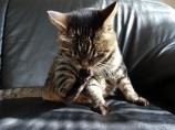 猫のミュウ・日々のお手入れ
