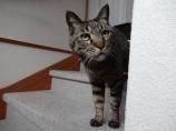 猫のレオ君・お出迎え