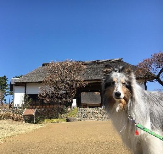 昭和へ91 (13)