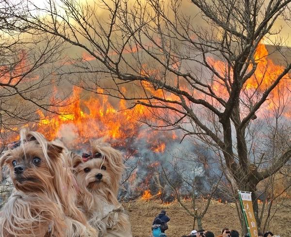 20180225 大室山の山焼き