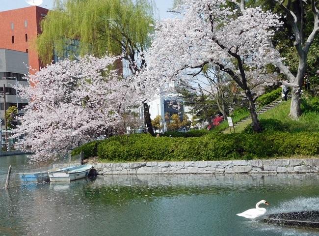 桜の木の下で3004