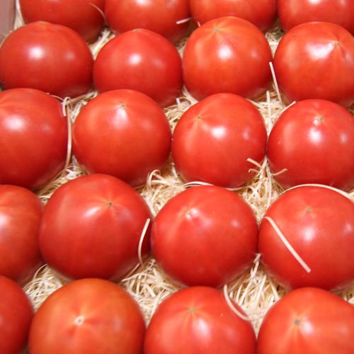 高知市春野 トマト