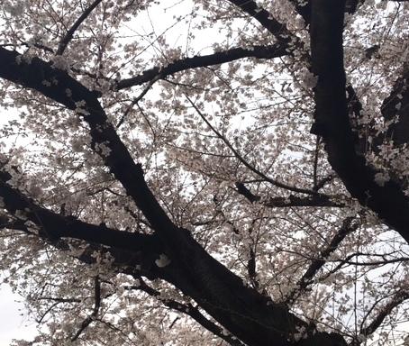 spring2018122.jpg