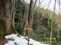 日本木の頭
