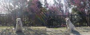 02-0308-梅と風花