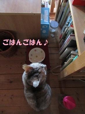 朝のご飯待ち