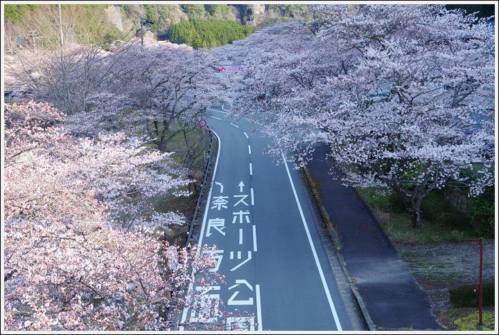 2018年3月27日 下北山スポーツ公園の桜ツーリング (2)