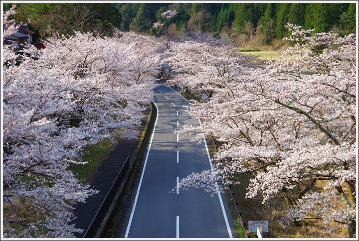 2018年3月27日 下北山スポーツ公園の桜ツーリング (1)
