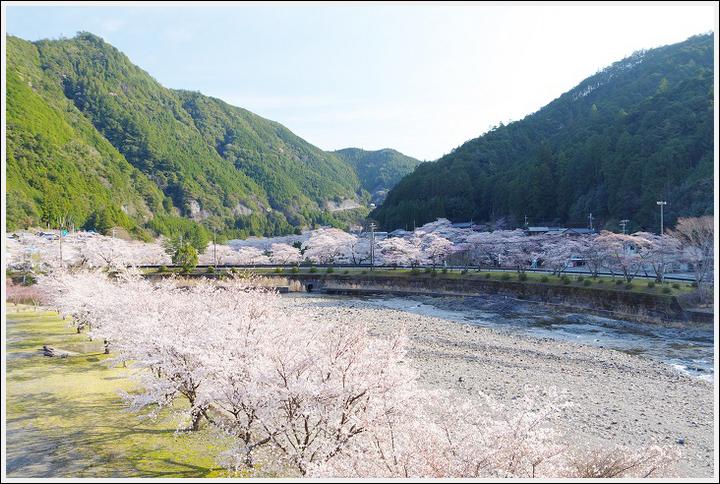 2018年3月27日 下北山スポーツ公園の桜ツーリング (3)