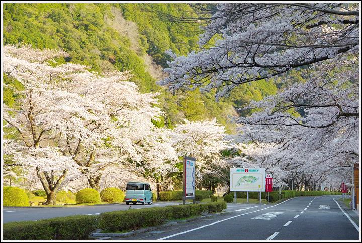 2018年3月27日 下北山スポーツ公園の桜ツーリング (5)