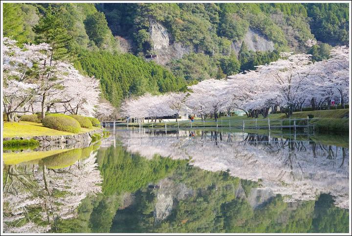2018年3月27日 下北山スポーツ公園の桜ツーリング (6)