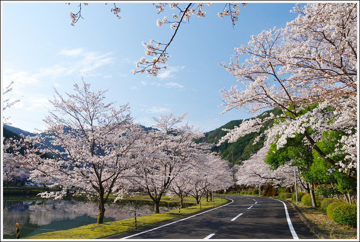 2018年3月27日 下北山スポーツ公園の桜ツーリング (7)