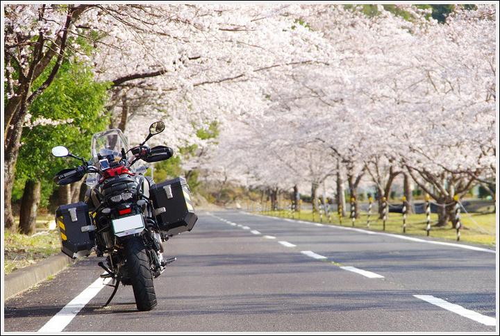 2018年3月27日 下北山スポーツ公園の桜ツーリング (8)