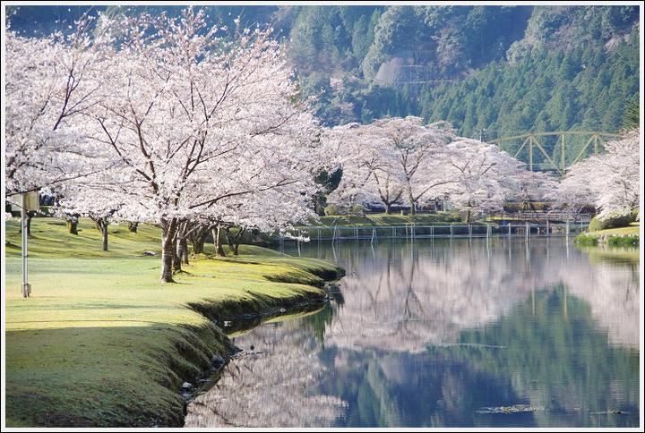 2018年3月27日 下北山スポーツ公園の桜ツーリング (9)