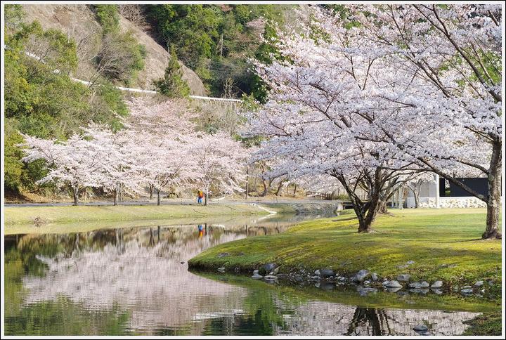 2018年3月27日 下北山スポーツ公園の桜ツーリング (12)