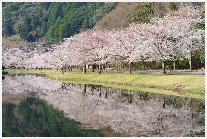 2018年3月27日 下北山スポーツ公園の桜ツーリング (13)