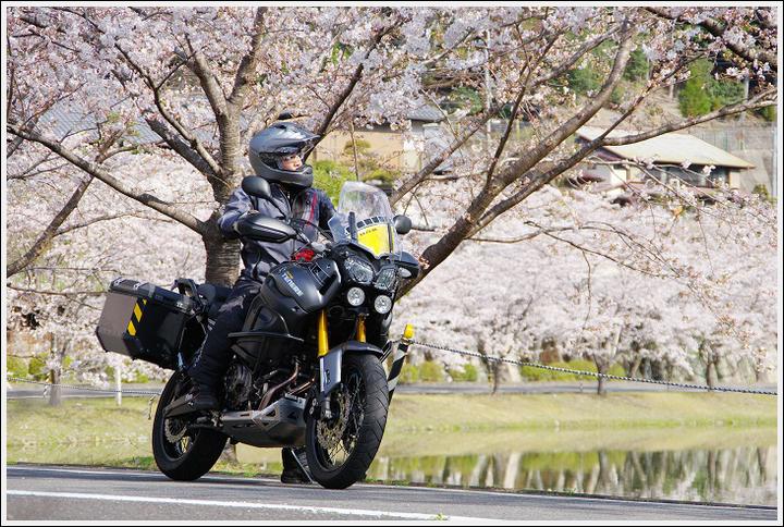 2018年3月27日 下北山スポーツ公園の桜ツーリング (14)