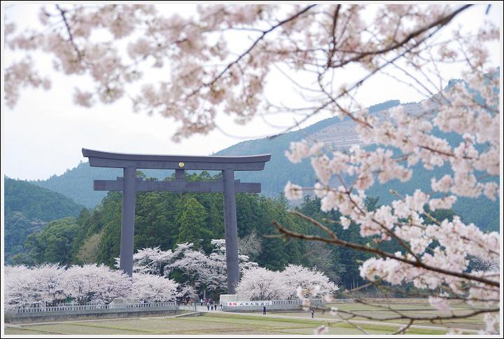 2018年3月27日 下北山スポーツ公園の桜ツーリング (19)