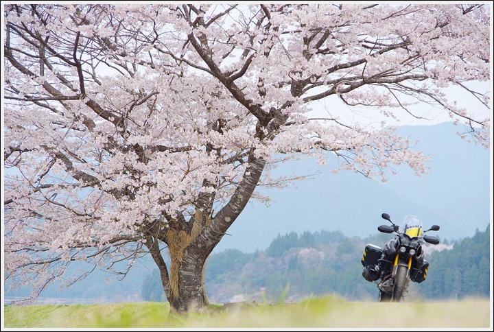 2018年3月27日 下北山スポーツ公園の桜ツーリング (20)