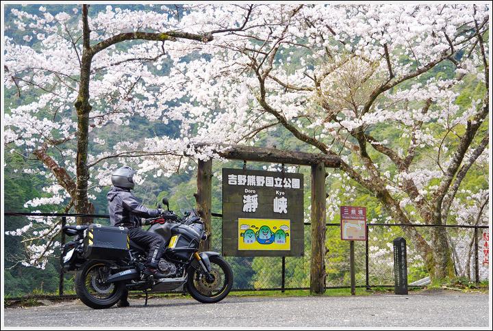 2018年3月27日 下北山スポーツ公園の桜ツーリング (17)