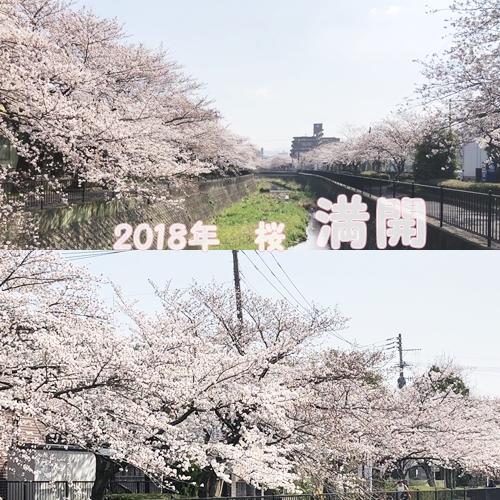 2018桜3