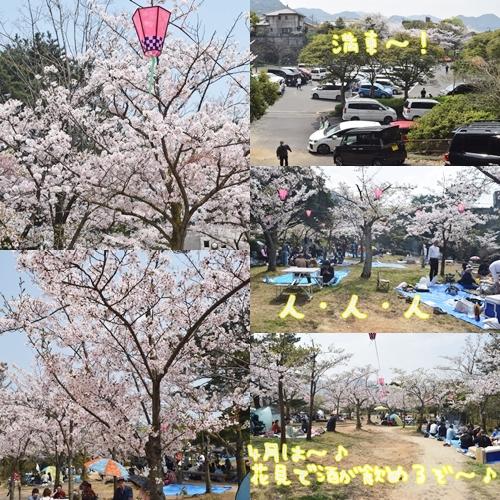 2018桜5