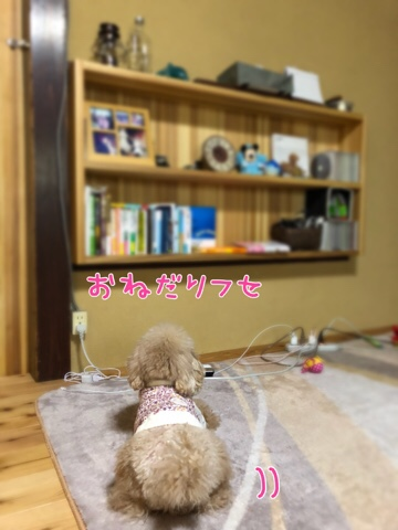 fc2blog_20180325212035be5.jpg