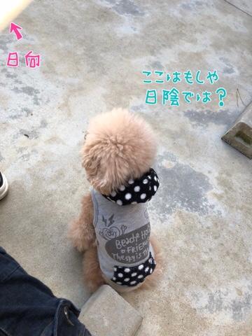 fc2blog_20180328213342f7d.jpg