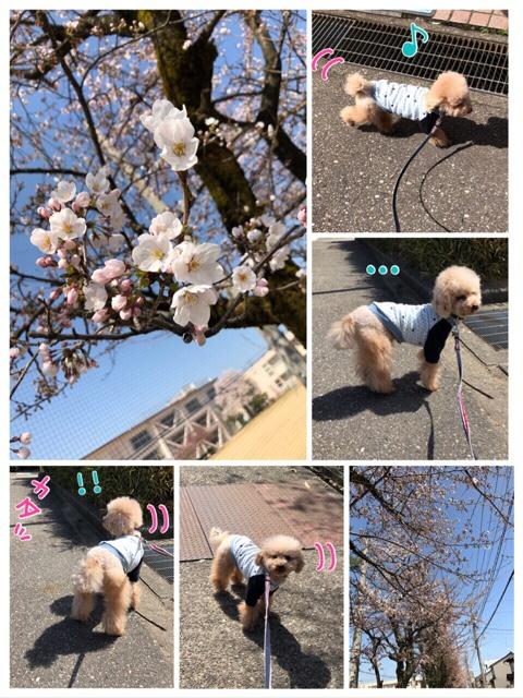 fc2blog_2018033122141774a.jpg