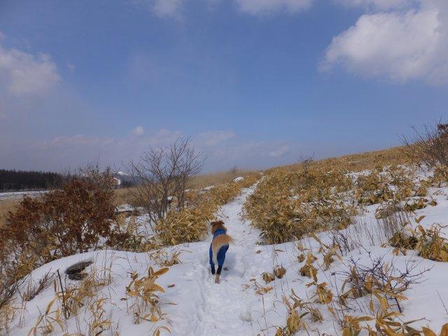 2018.2.24 霧ヶ峰 020