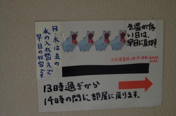 福岡市動物園 カバ タロー君