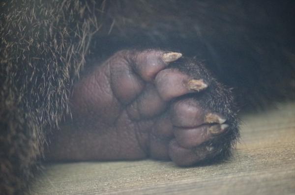 ビントロング チビントロング 福岡市動物園
