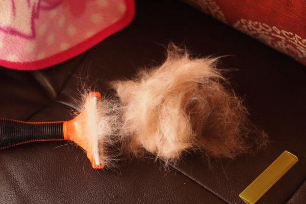 ファー◎◎ーター 後発品 (しあい)SIAYI ペット用ブラシ 合成ゴム 輪付き ステンレス刃付き 中小型犬 猫用 オレンジ