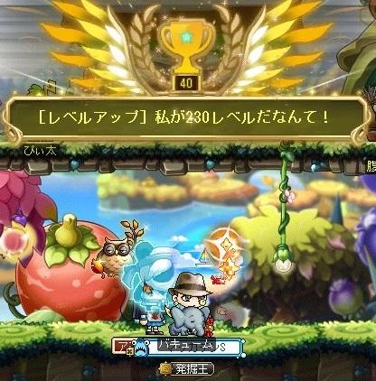 Maple_17008a.jpg