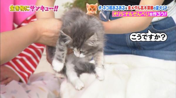 いきもの (27)