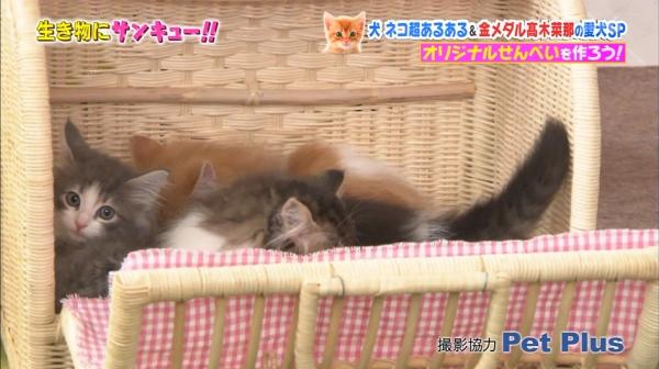 いきもの (28)