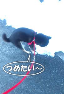 180124_yuki.jpg