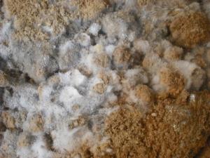 180324肥料についた白い菌アップ