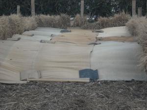 180326NO3堆肥できた!