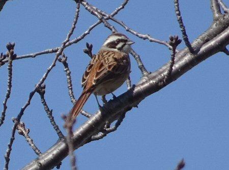 調節池の野鳥3_4